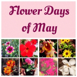 Flower Days of May